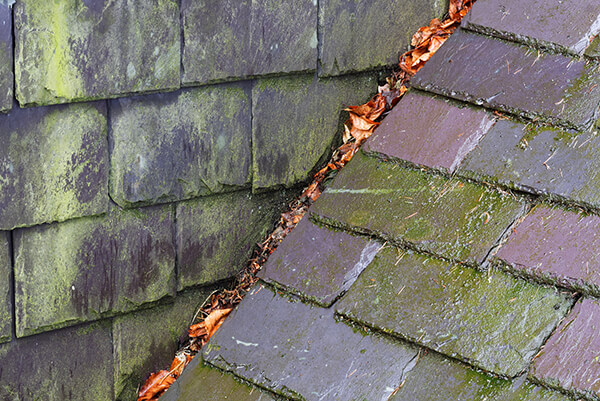 wet and dirty roof slates that have obvious molds.