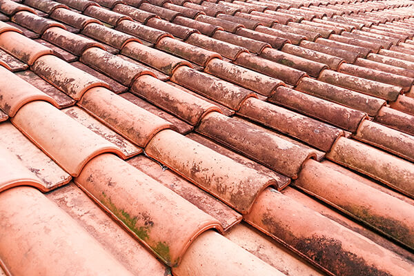 Molds growing on an old clay shingles